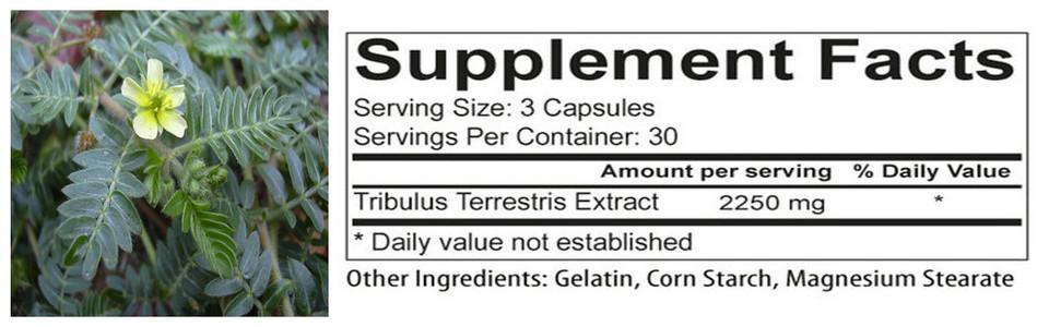 Est-ce que le Tribulus terrestris augmente réellement le niveau de testostérone ?