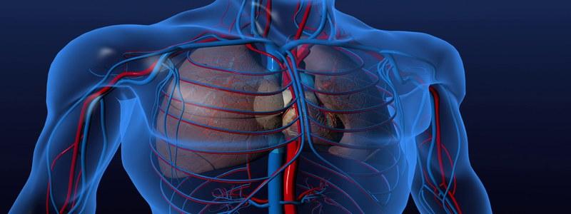 vitamine-d-coeur-et-vaisseaux-sanguins