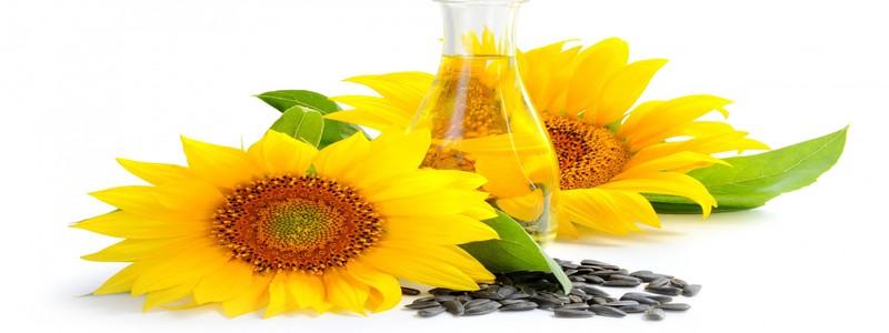 Les-graines-de-tournesol-parmi-les-aliments-naturels-qui-boostent-le-taux-de-testosterone