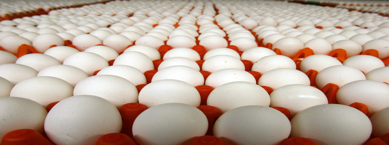 les-oeufs-l-un-des-aliments-naturels-qui-boostent-le-taux-de-testosterone