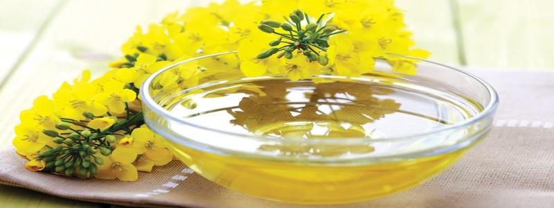 huile-de-canola-exemple-de-graisses-pour-booster-votre-testosterone